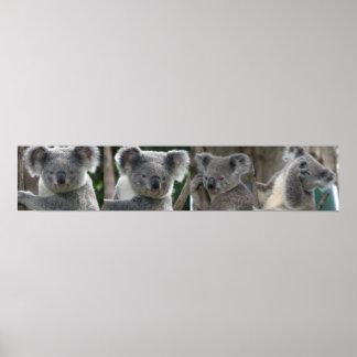 Poster Adopt A Koala Australia