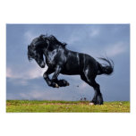 Poster - Black Friesian Horse Running Free