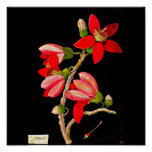 Poster-Botanical Art-Mary Delany 10 Poster