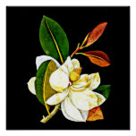 Poster-Botanical Art-Mary Delany 1 Poster