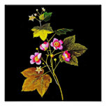 Poster-Botanical Art-Mary Delany 4 Poster