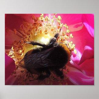 "Poster ""Bumblebee """