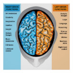 Poster Human brain left and right functions