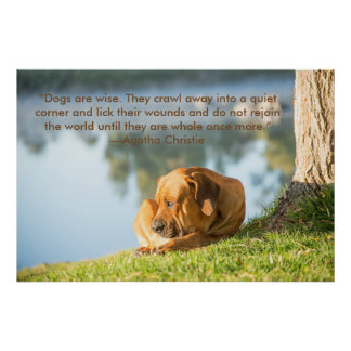 Poster of Boerboel dog with  Inspirational Quote