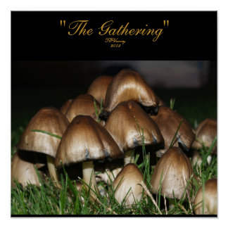 "Poster of Mushrooms ""The Gathering"""