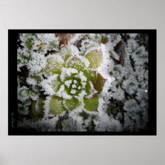 poster photo black natural autumn winter snows