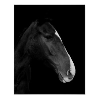 Poster, photographs black and white horse. poster