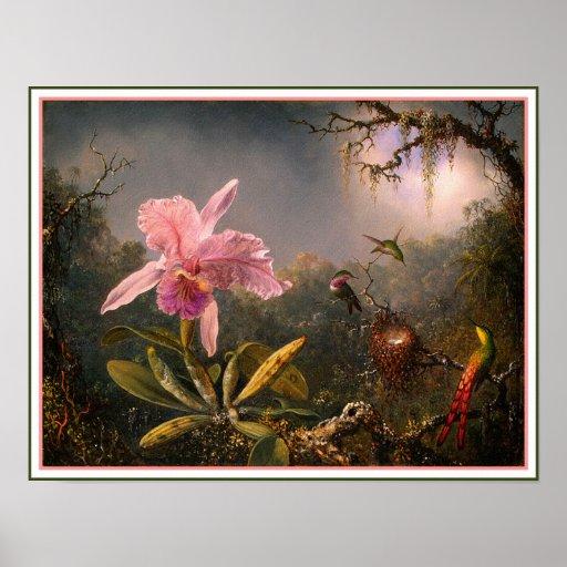 Poster/Print: Cattleya Orchid & Three Hummingbirds