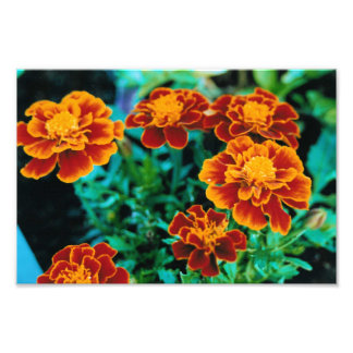 Poster Print with Orange and yellow Exotic Flowers Photo Print