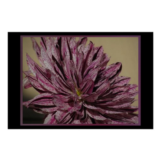 Poster - Purple Dahlia Flower