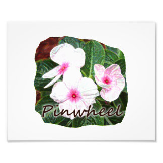Poster Purple Pinwheel Flowers w text Photographic Print