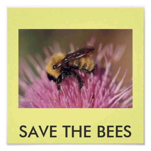 Poster: SAVE THE BEES Poster