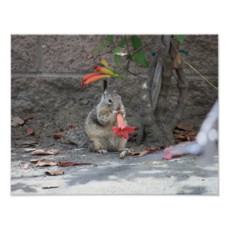 Poster - Squirrel