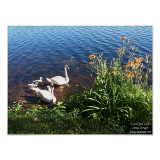 Poster: Swans and Lilies Poster