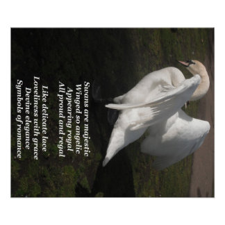 Poster Swans Are Majestic By Ladee Basset