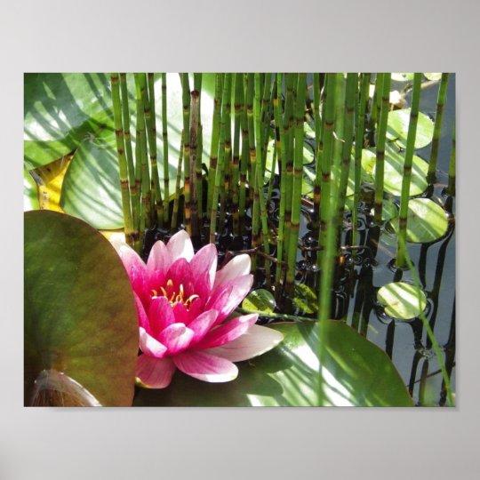Poster Water lily Zen 27.94x21.59cm