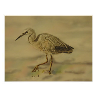 Poster white faced heron