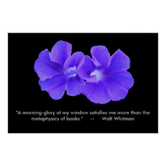 Poster, Whitman, Purple Morning glories_5226