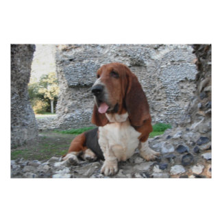 Poster With Basset Hound Castle Ruin Visit