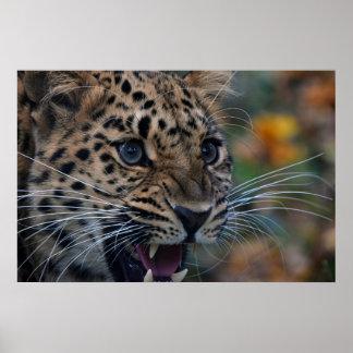 Poster with cute roaring leopard portrait