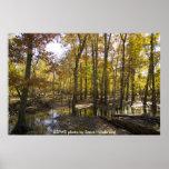 Poster / Woods Standing in Water