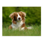 Postkarte / Hunde Border Collie Portrait