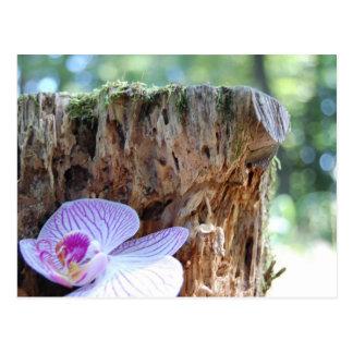 Postkarte Orchidee im Wald