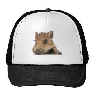 pot bellied pig piglet vector mesh hat
