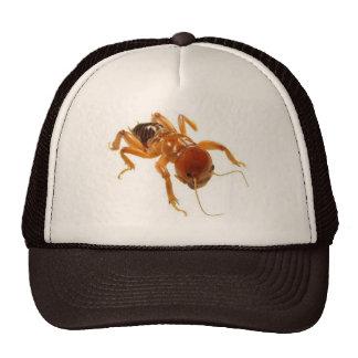 Potato Bug Cap