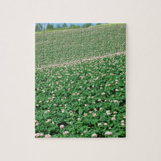 Potato Field 3 Jigsaw Puzzle