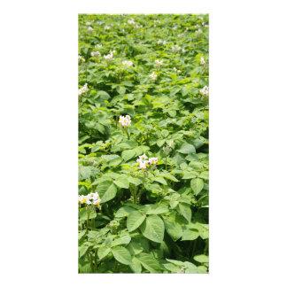 Potato field customized photo card