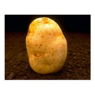 Potato on dirt postcard