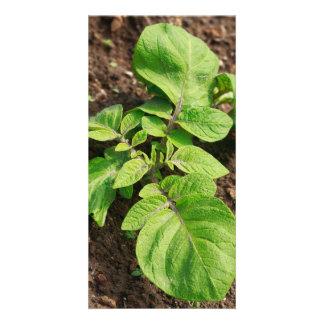 Potato plant personalised photo card