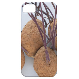Potato plant sprout iPhone 5 cases