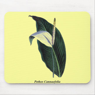 Pothos Cannaefolia Mouse Pad