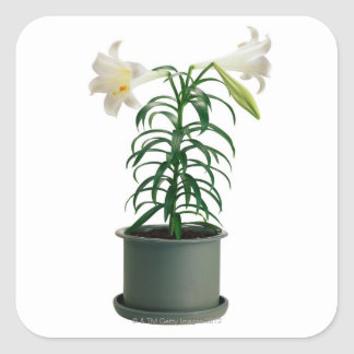 Potted Easter Lily Square Sticker