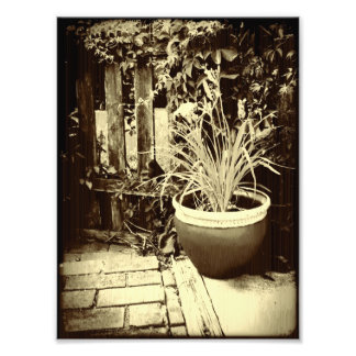 Potted Lilly Art Photo
