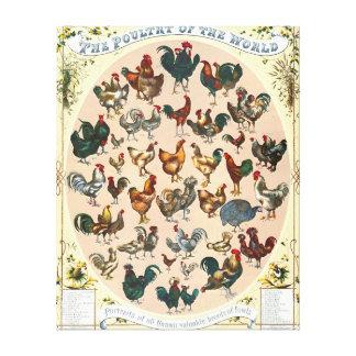Poultry Breeds 1868 Canvas Prints