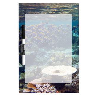 Powder Blue Surgeon Fish Dry Erase Board