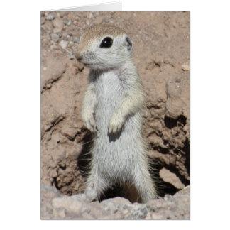 Power Ranger Squirrel Card
