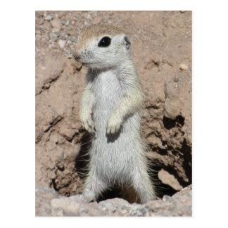 Power Ranger Squirrel Postcard