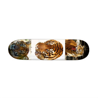 Power & Strength_ Skateboard Skateboard Decks