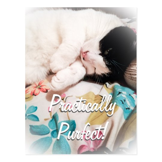 Practically Purfect Cat Postcard