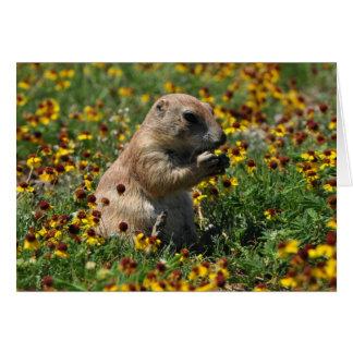 Praire Dog Greeting Card