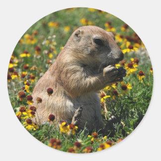 Praire Dog Round Sticker