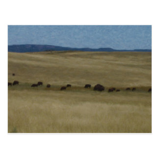 Prairie Buffalo by Shawna Mac Postcard