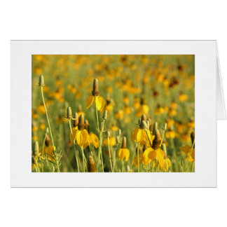 Prairie Coneflowers Card