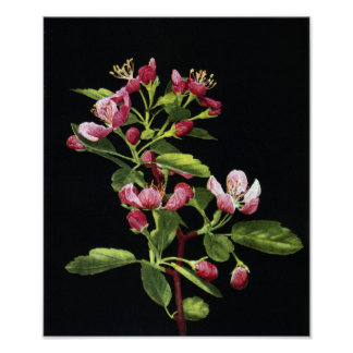 Prairie Crabapple Blossoms Posters