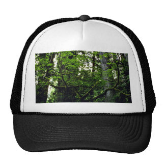 Prairie Creek Trucker Hat