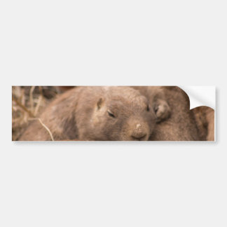 prairie dog #1 bumper sticker